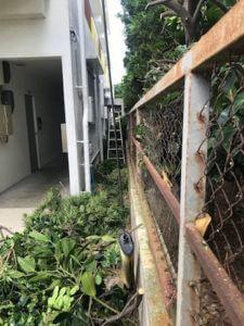 宮古島で剪定作業